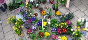 Blume-Tag_06
